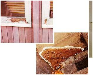 Dry Wet Rot Causes Treatment in South London